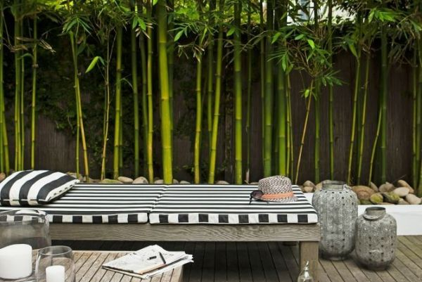 hortikultura.mk_bambus_4