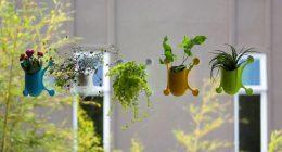 hortikultura.mk_livi pots 1