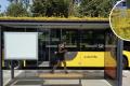 """Овој холандски град ги трансформирал своите автобуски постојки во """"постојки"""" за пчели"""